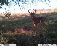 2009-itb-bucks-8