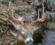 2013-itb-bucks-1
