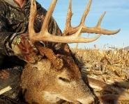 2013-itb-bucks-26