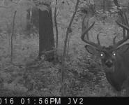 2016-itb-bucks-23