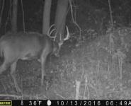2016-itb-bucks-4